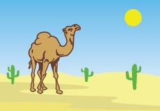 Chameau dans le désert parmi des cactus Photo libre de droits