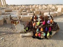 Chameau dans le Palmyra Image stock