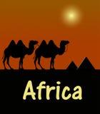 Chameau dans le pochoir égyptien de désert Photos stock
