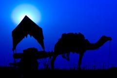 Chameau de silhouette au coucher du soleil dans l'Inde. Image stock