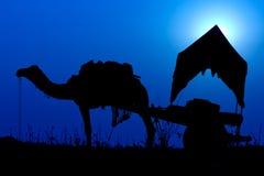 Chameau de silhouette au coucher du soleil dans l'Inde Photographie stock libre de droits