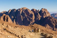 Chameau dromedar de silhouette sur le fond de la montagne de St Moïse, Egypte, Sinai photographie stock