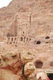Chameau et les tombeaux royaux dans PETRA Images libres de droits