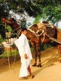 Chameau/Indien de sourire OwnerAngry photographie stock libre de droits