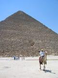 Chameau par la pyramide Images stock