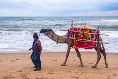 Chameau pour le tour sur la plage Images libres de droits