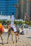 Chameau sur la plage de Jumeirah dans Duba Images stock