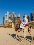 Chameau sur la plage de Jumeirah dans Duba Photo libre de droits