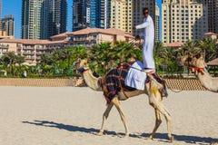Chameau sur la plage de Jumeirah dans Duba Photographie stock