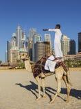 Chameau sur la plage de Jumeirah dans Duba Image libre de droits