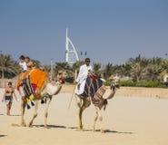 Chameau sur la plage de Jumeirah dans Duba Photos stock