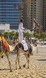 Chameau sur la plage de Jumeirah dans Duba Photographie stock libre de droits