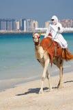 Chameau sur la plage de Jumeirah, Dubaï Photographie stock libre de droits