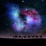 Chameaux dans la nuit Image stock