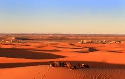 Chameaux dans le désert du Sahara au coucher du soleil Image stock