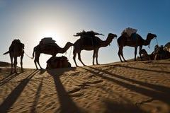 Chameaux dans le désert de dunes de sable du Sahara Photographie stock libre de droits