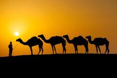 Chameaux dans un désert Photographie stock