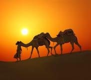 Chameaux de Cameleerand - silhouette contre le coucher du soleil photo stock