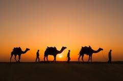 Chameaux de silhouette dans le désert de Thar Photo libre de droits