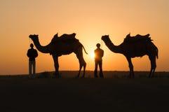 Chameaux de silhouette dans le désert de Thar Photos stock