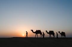 Chameaux de silhouette dans le désert de Thar Photographie stock