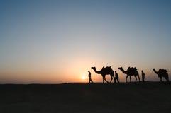 Chameaux de silhouette dans le désert de Thar Images stock