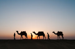Chameaux de silhouette dans le désert de Thar Image libre de droits