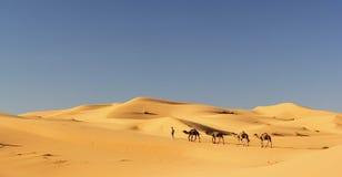 Chameaux en erg Chebbi, Maroc Image stock