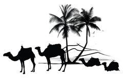 chameaux et palmier illustration de vecteur