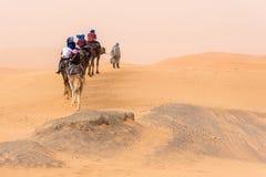 Chameaux marchant dans le désert Photos stock