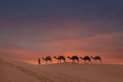 Chameaux sur le désert Images stock