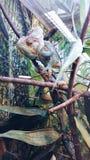 chameleon royalty-vrije stock foto's