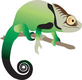 Chameleon. A vector illustration of a cute chameleon lizard Royalty Free Stock Photography
