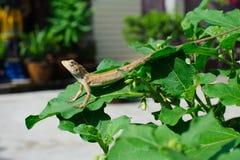 The chameleon Stock Photos