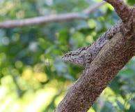 chameleon Royalty-vrije Stock Fotografie