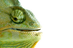Chameleon Fotos de Stock Royalty Free