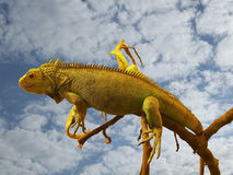 Chameleon. Animal on tree over cloudy sky Stock Photography