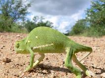 Chameleon. African chameleon walking across the road Stock Photo