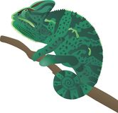 Chameleon. Sits on a branch and tracks down a booty vector illustration