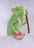 Chameleon bath time. A veiled chameleon is taking a bath Royalty Free Stock Images