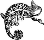 Chameleon black white Stock Images