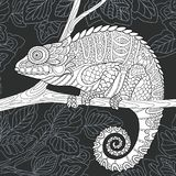 Chameleon in black and white style Royalty Free Stock Photography