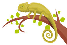 Chameleon. On branch vector illustration background Royalty Free Stock Photos