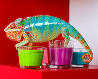 Chameleon and candles on red background Royalty Free Stock Photo