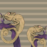 Chameleon card vector illustration Royalty Free Stock Photo