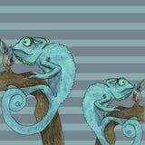 Chameleon card vector illustration Royalty Free Stock Photo