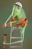 Chameleon Carpenter. A chameleon is dressed as a carpenter on a ladder Stock Images