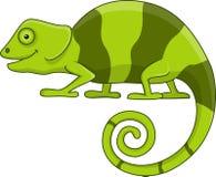 Chameleon cartoon Stock Images