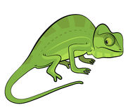 Chameleon cartoon Stock Photos
