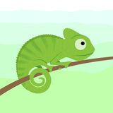 Chameleon. Cartoon character sitting on tree branch vector illustration Royalty Free Stock Photos